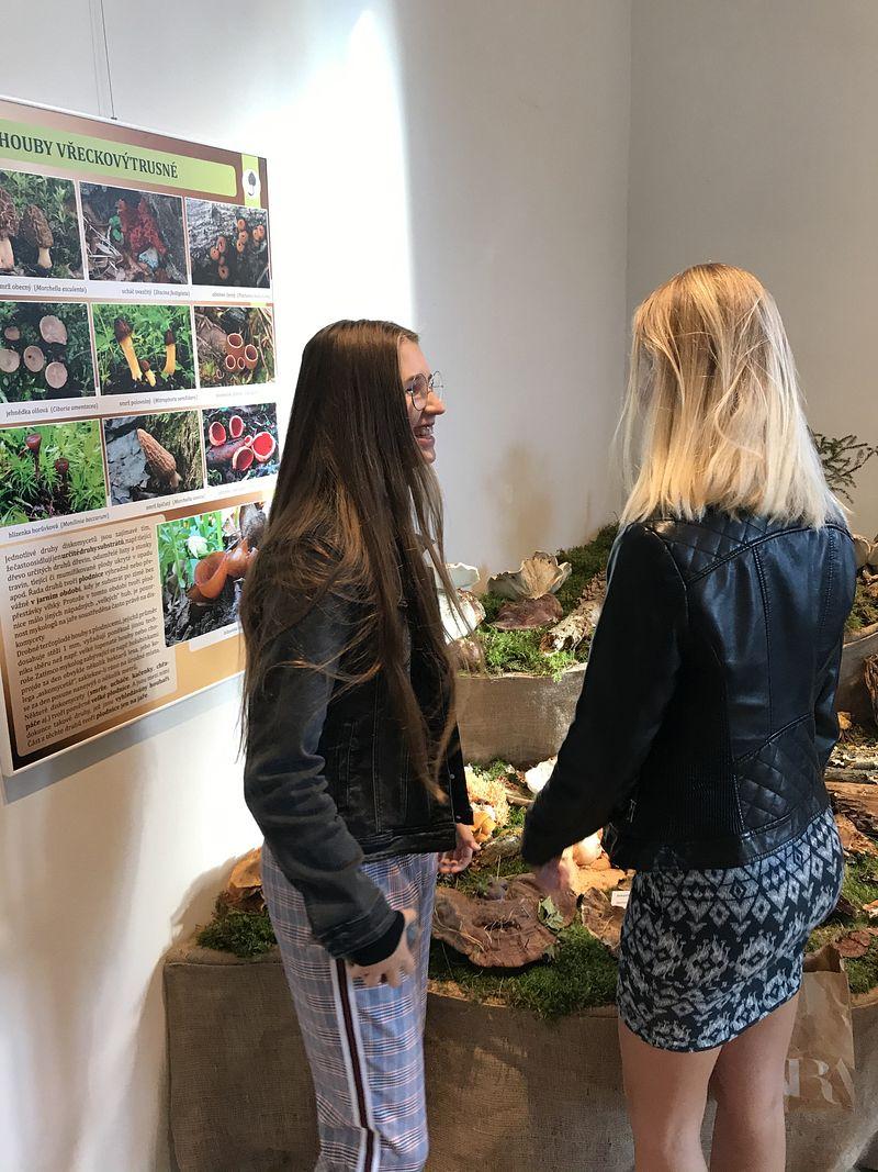 Výstava hub