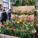 1. ročník navštívil výstavu orchidejí